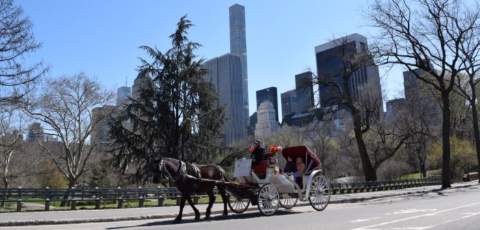 What you should know about the NYC carriage horses: They're humane, regulated, safe, healthy, political and beloved.